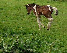 First Foal Born at Elvetham in 100 Years